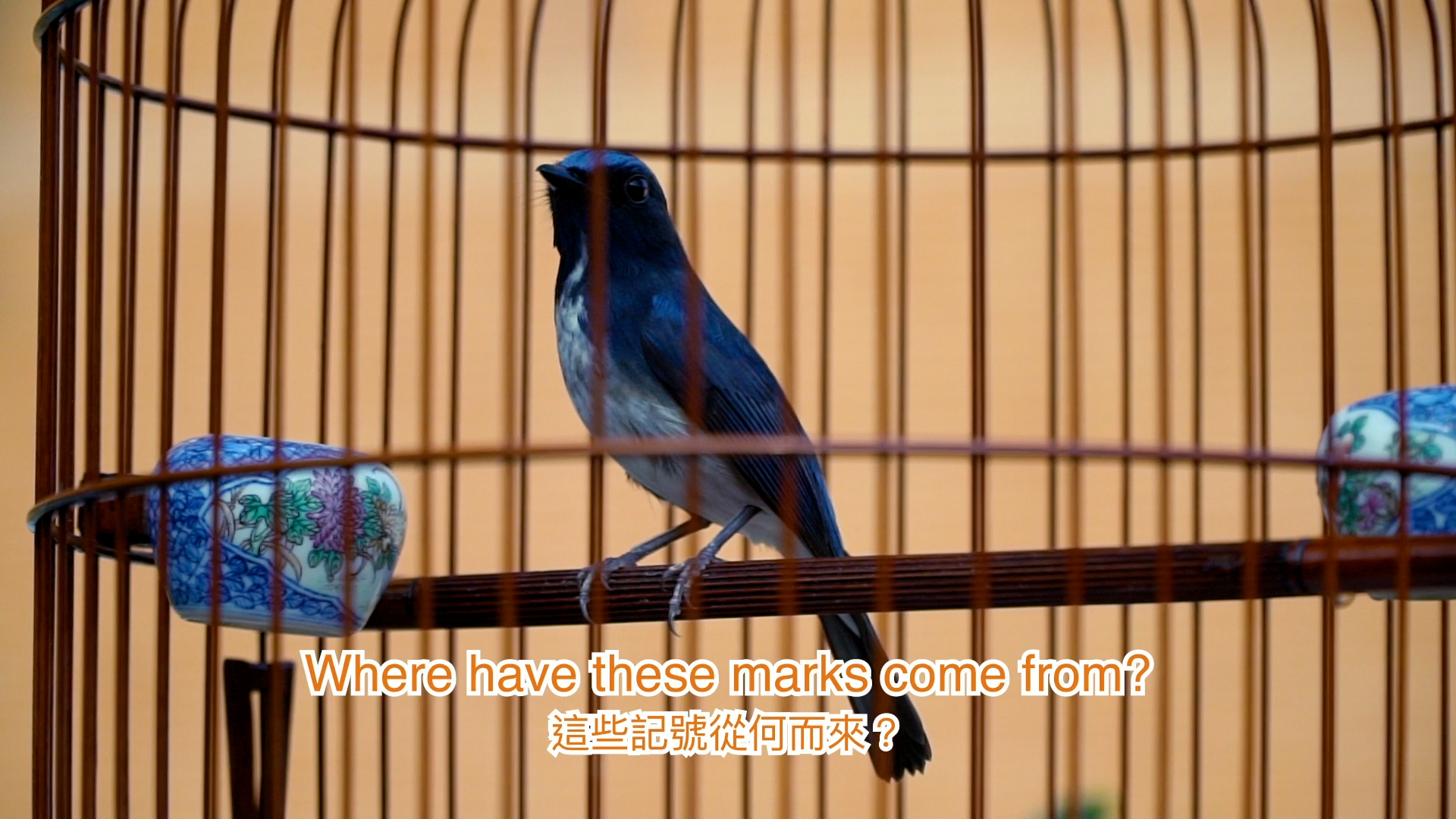 A bird in a cage sits on its perch, beneath it are words in Chinese and English saying Where id you get those marks from?
